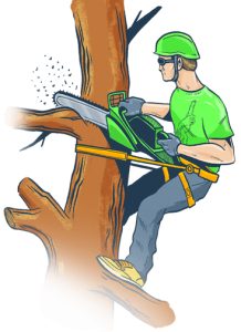 Tree Pruning Harare