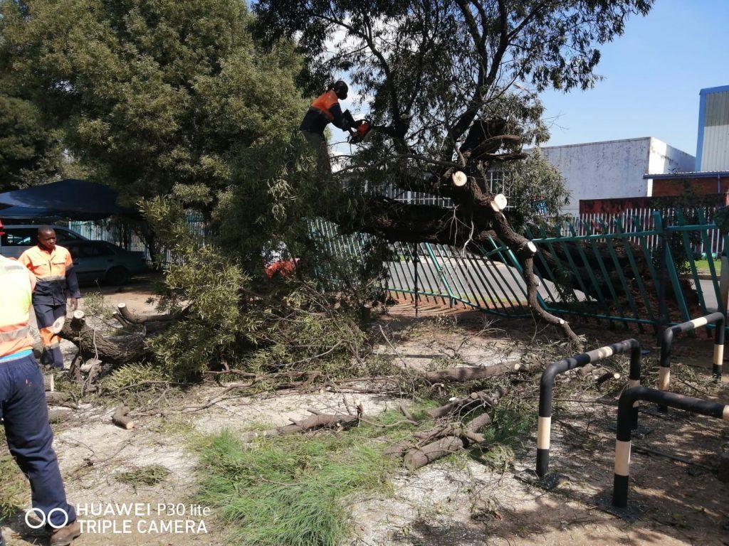 tree removal harare